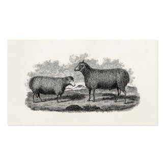 Vintage 1800s Sheep Ewe Illustration Retro Farm Double-Sided Standard Business Cards (Pack Of 100)