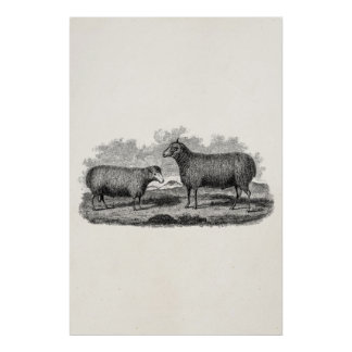 Vintage 1800s Sheep Ewe Illustration Retro Farm Poster