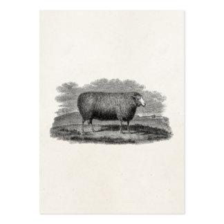 Vintage 1800s Sheep Ewe Illustration Retro Wool Large Business Cards (Pack Of 100)