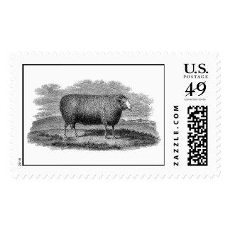 Vintage 1800s Sheep Ewe Illustration Retro Wool Stamp