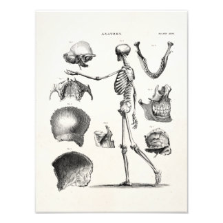 Vintage 1800s Skeleton Antique Anatomy Skeletons Art Photo