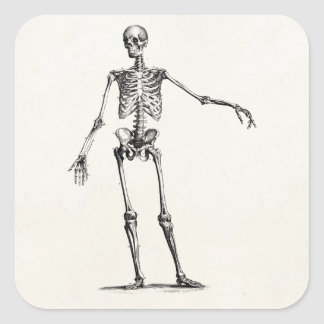Vintage 1800s Skeleton Retro Anatomy Skeletons Square Sticker
