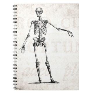 Vintage 1800s Skeleton Retro Skeletons Anatomy Notebook