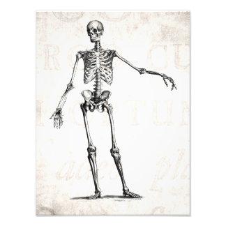 Vintage 1800s Skeleton Retro Skeletons Anatomy Photo Print
