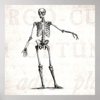 Vintage 1800s Skeleton Retro Skeletons Anatomy Poster