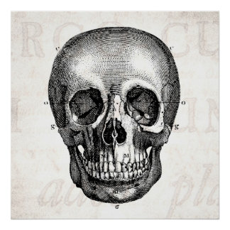 Vintage 1800s Skull Retro Anatomical Old Drawing Poster