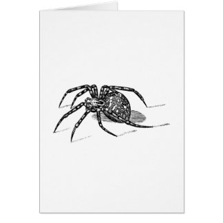 Vintage 1800s Spider Illustration Spiders Template Stationery Note Card