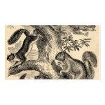 Vintage 1800s Squirrels Illustration - Squirrel Business Card