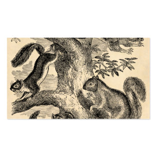 Vintage 1800s Squirrels Illustration - Squirrel Double-Sided Standard Business Cards (Pack Of 100)