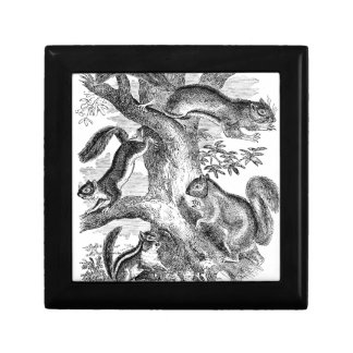 Vintage 1800s Squirrels Illustration - Squirrel Jewelry Boxes