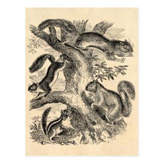 Vintage 1800s Squirrels Illustration - Squirrel Postcard