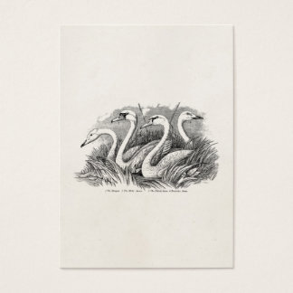 Vintage 1800s Swan Bird Swans Old Birds Template Business Card