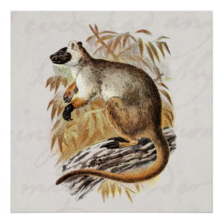 Vintage 1800s Tree Kangaroo Old Kangaroos Template Poster