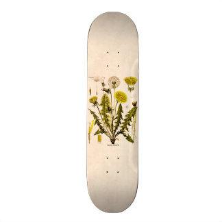 Vintage 1800s Yellow Dandelion Gone to Seed Floral Skateboard Deck