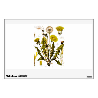Vintage 1800s Yellow Dandelion Gone to Seed Floral Wall Sticker