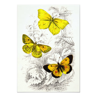 Vintage 1800s Yellow Orange Butterflies Template 5x7 Paper Invitation Card