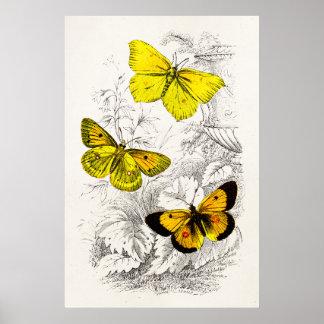 Vintage 1800s Yellow Orange Butterflies Template Poster