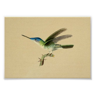 Vintage 1830 Hummingbird Print Blue Green