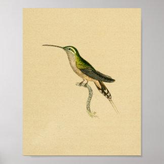 Vintage 1830 Hummingbird Print Green Black