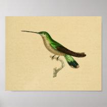 Vintage 1830 Hummingbird Print Green Blue
