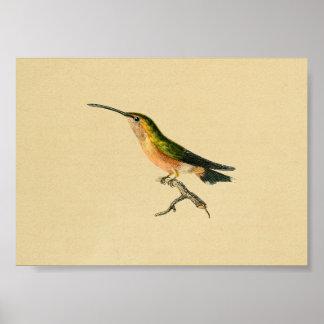 Vintage 1830 Hummingbird Print Green Orange