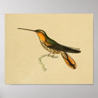 Vintage 1830 Hummingbird Print Orange