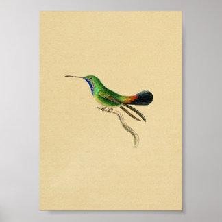 Vintage 1830 Hummingbird Print Red Green