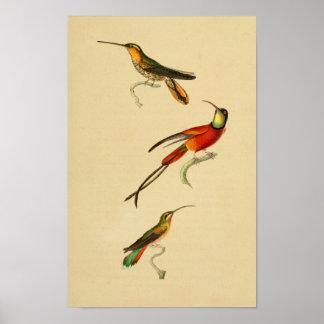 Vintage 1830 Hummingbirds Print Red Green
