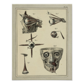 Vintage 1831 Eye Muscles Anatomy Print