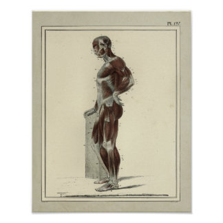 Vintage 1831 Muscles Lateral Anatomy Print