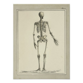 Vintage 1831 Skeleton Anatomy Print