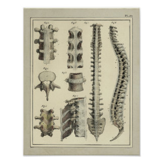 Vintage 1831 Spinal Column Anatomy Print