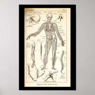 Vintage 1844 Human Skeleton Anatomy Print