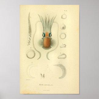 Vintage 1845 Squid Color Art Print