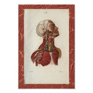 Vintage 1852 Anatomy Print Cervical Lymphatics