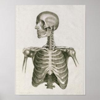 Vintage 1853 Skull Skeletal Anatomy Art Print