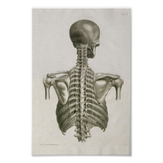 Vintage 1853 Skull Spine Anatomy Art Print