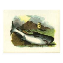 Vintage 1859 Shark FolkArt Illustration Postcard