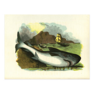 Vintage 1859 Shark FolkArt Illustration Postcard