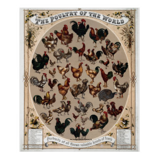 """""""Vintage~1868 Poultry of the World"""" Print"""