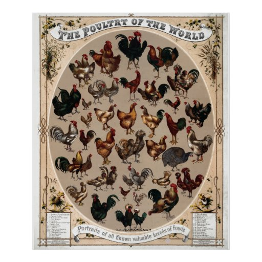 """""""Vintage~1868 Poultry of the World"""" Poster"""