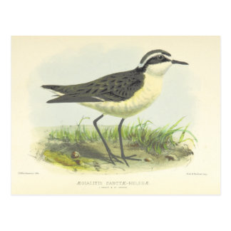 Vintage 1875 Bird Drawing from St Helena Postcard