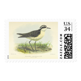 Vintage 1875 Bird Drawing from St Helena Stamp