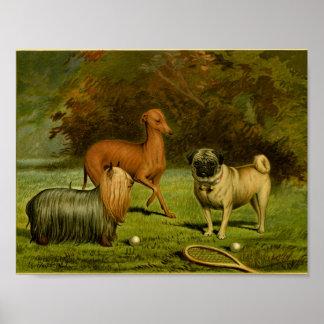 Vintage 1881 Terrier e impresión del barro amasado Póster
