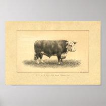 Vintage 1888 Bull Print