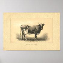 Vintage 1888 Cow Print