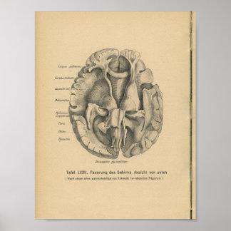 Vintage 1888 German Anatomy Print Brain