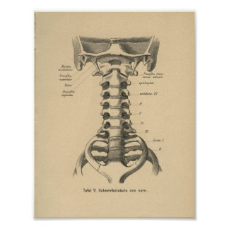 Vintage 1888 German Anatomy Print Cervical Spine