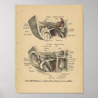 Vintage 1888 German Anatomy Print Ear