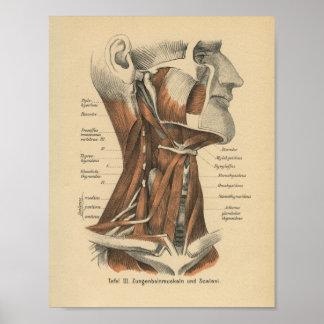 Vintage 1888 German Anatomy Print Face and Neck